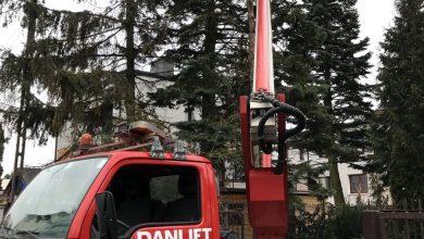 Wycinka i pielęgnacja drzewa z podnośnika koszowego firmy Danlift